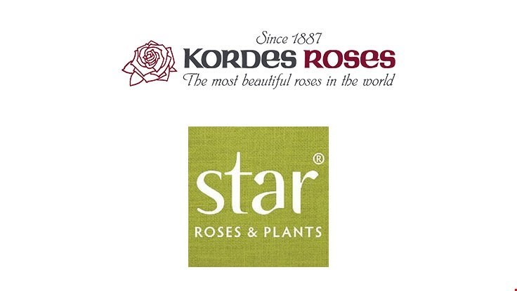 Star Roses and Plants launches new Kordes website
