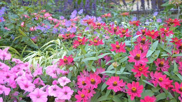 Trends to consider with annual plantings