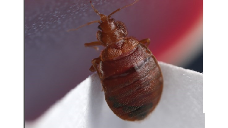 Teachers Union Files Grievance Over Bed Bugs at School