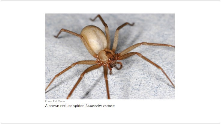 New Guide Provides BMPs for Integrated Pest Management of the Brown Recluse Spider