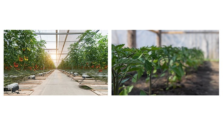 "Cuesta Roble Consulting compares ""greenhouse"" and ""protected agriculture"" vegetable production"