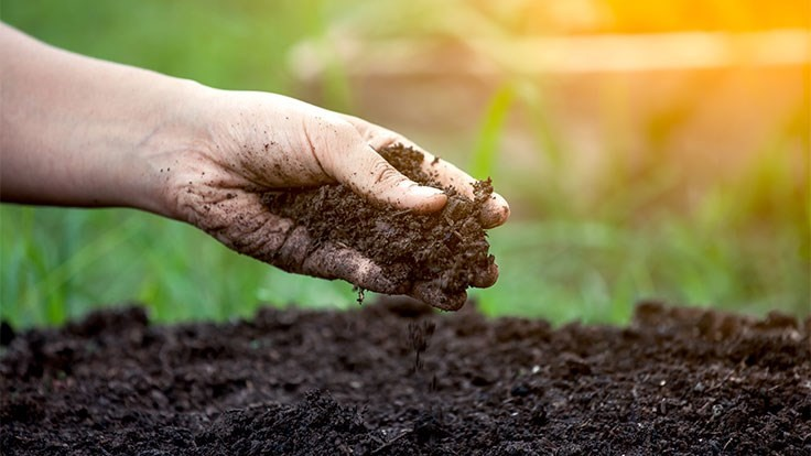 Understanding the soil microbiome