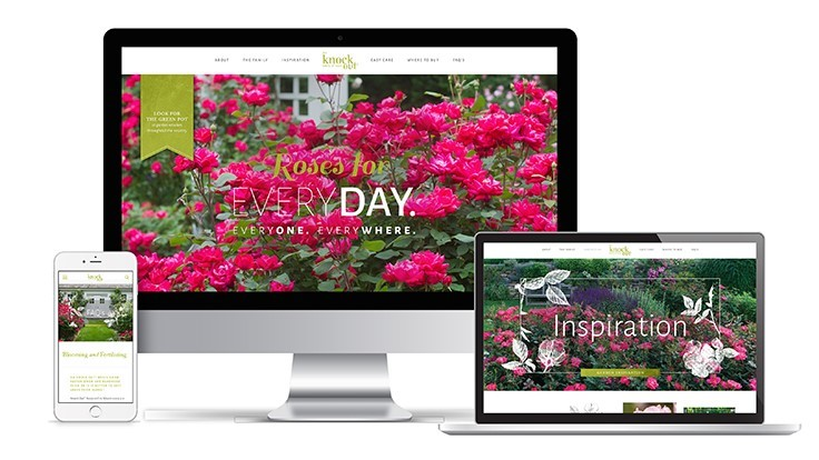 Star Roses and Plants launches new website for Knock Out Roses
