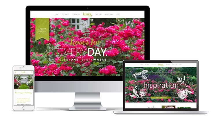 Star Roses and Plants launches Knock Out rose website