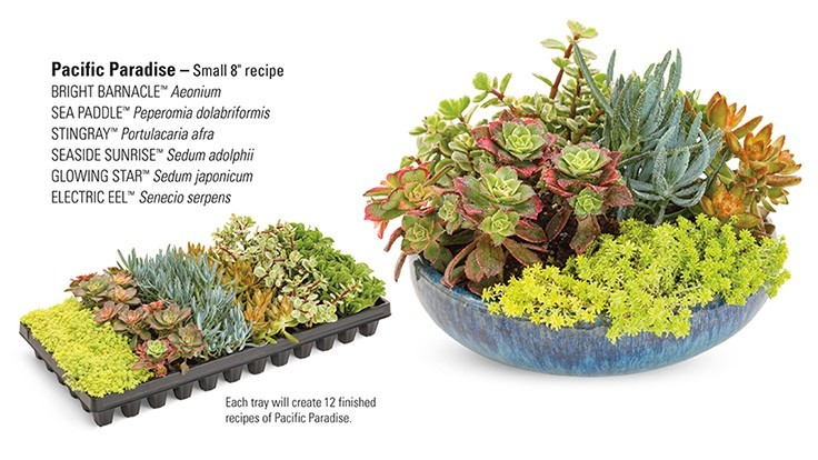 Proven Winners launches Coral Creations succulents line