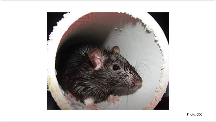 New York City Using Dry Ice to Control Rats