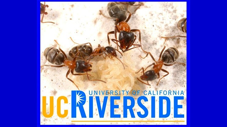 UC-Riverside Pest Conference Scheduled for March 21