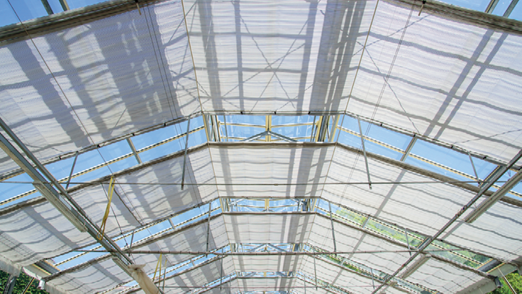 How to Improve Efficiency in a Greenhouse