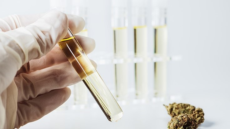 5 Things Cultivators Should Know About Cannabis Potency Testing