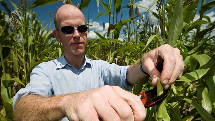 UF/IFAS researchers hope better technology produces less costly ethanol