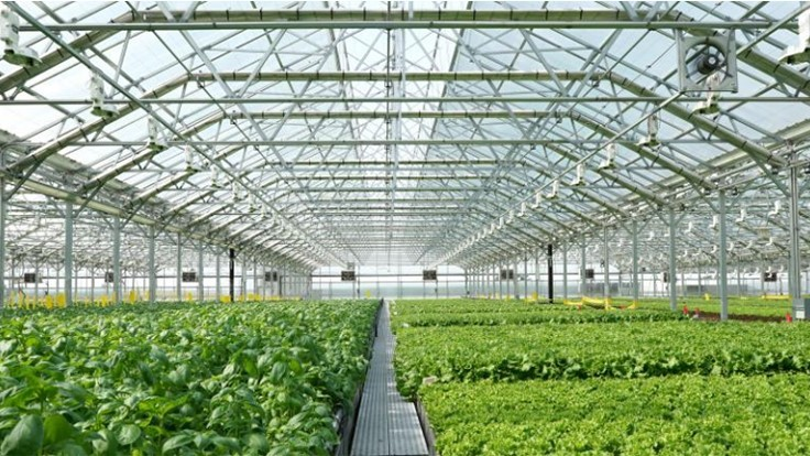 Gotham Greens opens new facility in Baltimore
