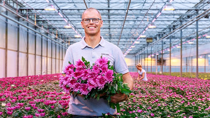 LED grow lights deliver stunning chrysanthemums