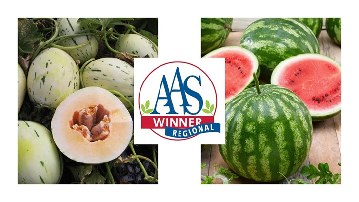 Two new melons earn AAS Winner designation for North America