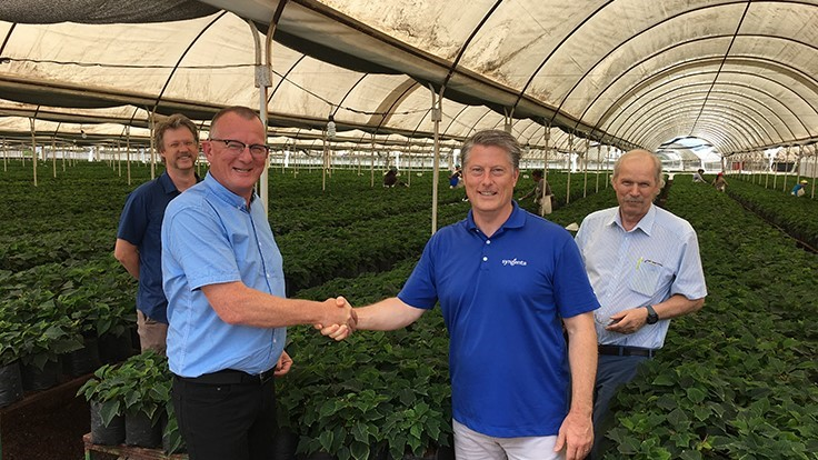 Syngenta Flowers and Beekenkamp Plants combine poinsettia portfolio and supply chain in North America
