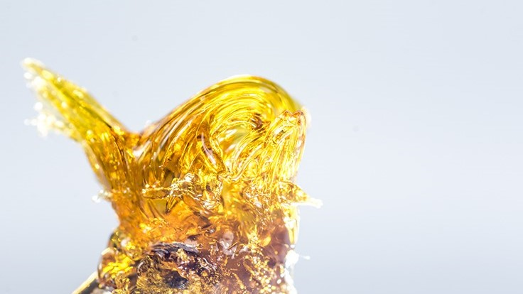 Your Guide to Cannabis Extracts and Concentrates: Part I