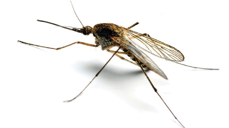Georgia Woman Dies from West Nile Virus