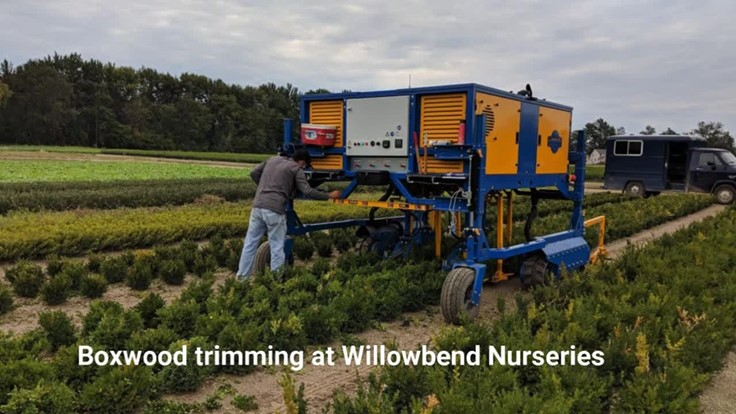 Boxwood trimming at Willowbend Nurseries