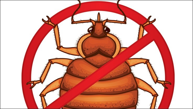 Practical Bed Bug Control Tips From Mgk Pct Pest Control Technology