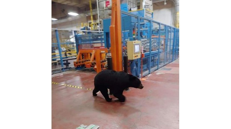 Black bear takes a plant tour at Denso