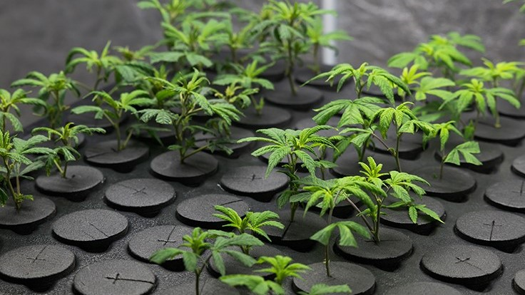Illinois Awards First Adult-Use Cannabis Dispensary Licenses