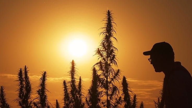 photo of Halifax County, Va., Secures $250,000 Grant to Fund Hemp Processor Startup image