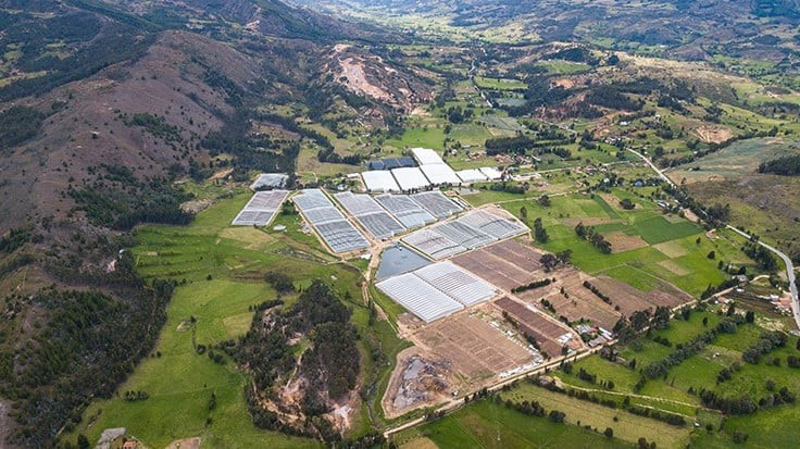 Medical Cannabis Exports in Colombia Promise Massive Market Potential