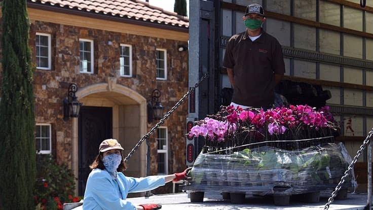 Dummen Orange And Armstrong Garden Centers Distributed Orchids To