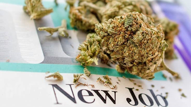 Job Boom Continues to Soar in Cannabis Sector, Outdoing Nearly All Other American Industries