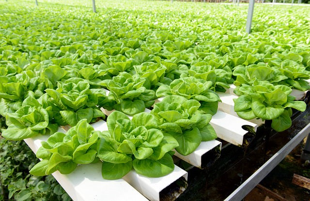 National Organic Standards Board votes to keep hydroponic and aquaponic produce organic