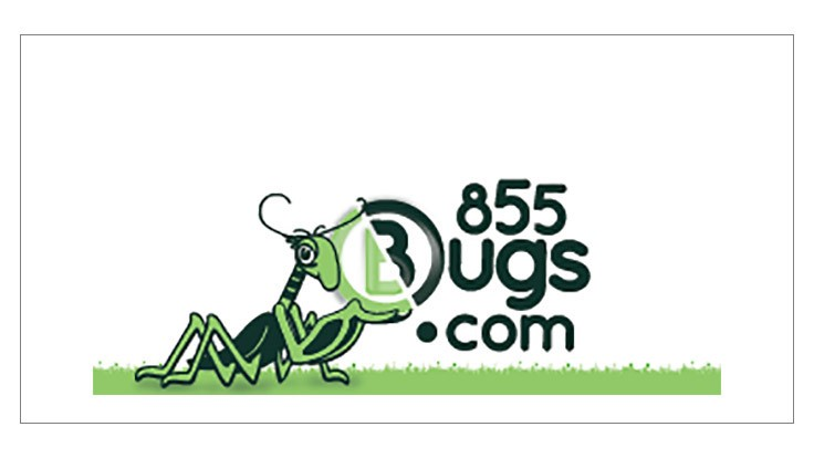 BugsDotCom Takes On a New Look