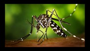 USDA Pest Management Program Targets Virus-Transmitting Mosquitoes