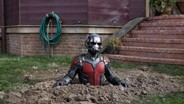 Ant Experts Critique 'Ant-Man'
