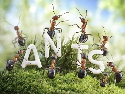The ants go marketing