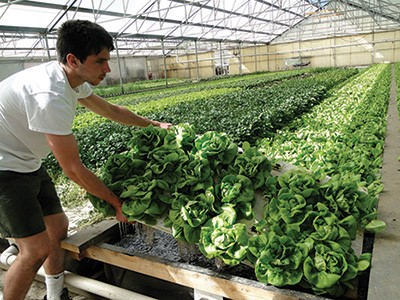 Growing with the fishes - Produce Grower