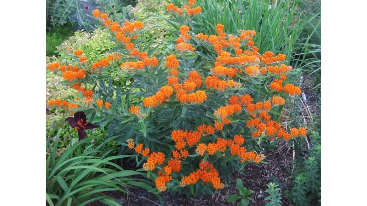Perennial plant of the year named