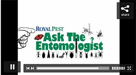 Video: Royal Pest's 'Ask the Entomologist' Promo
