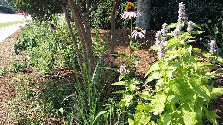 Atlantic Avenue Orchid & Garden creates certified pollinator garden