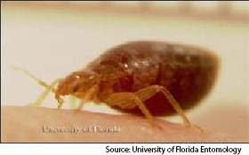 A Look At Bed Bug Look Alikes Pct Pest Control Technology