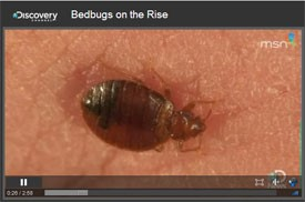 Video: Bed Bugs on the Rise