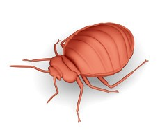 Bed Bug White Paper
