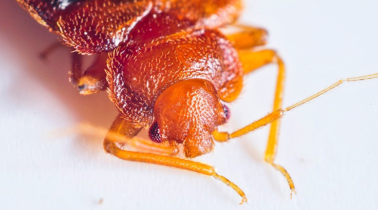 Are You Marketing Your Bed Bug Services Properly?