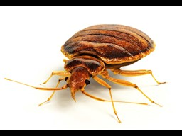 HUD Issues Guidelines on Bed Bugs