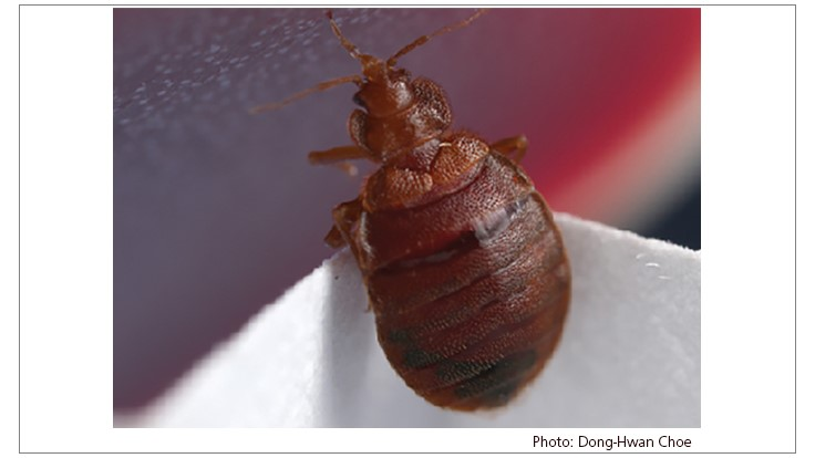 Bed Bugs Have Developed Resistance to Neonicotinoids, Researchers Report