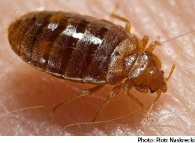 Bed Bugs Can Survive Freezing Temps, But Cold Can Still Kill Them