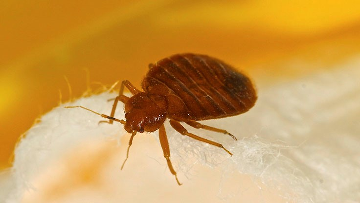 Detroit Bus Drivers 'Fed Up' with Bed Bugs, Rodents