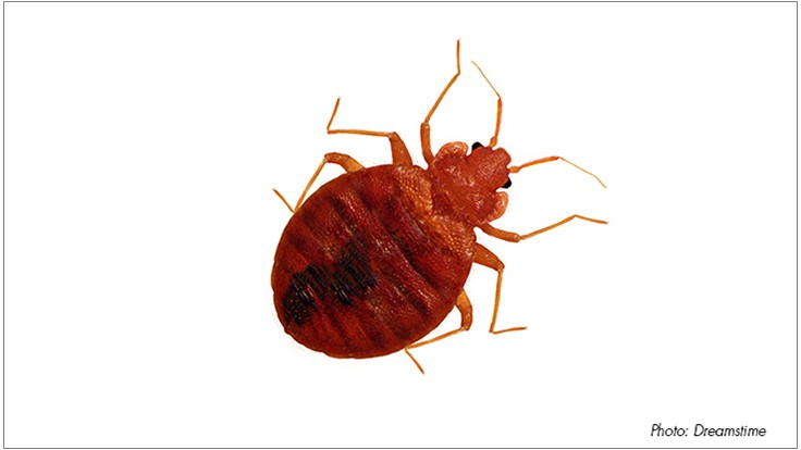 Study Proves Bed Bugs Can Induce Potentially Deadly Systemic Reactions in Humans