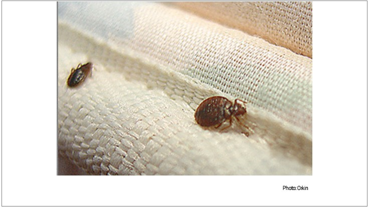 Orkin Releases New Top 50 Bed Bug Cities List