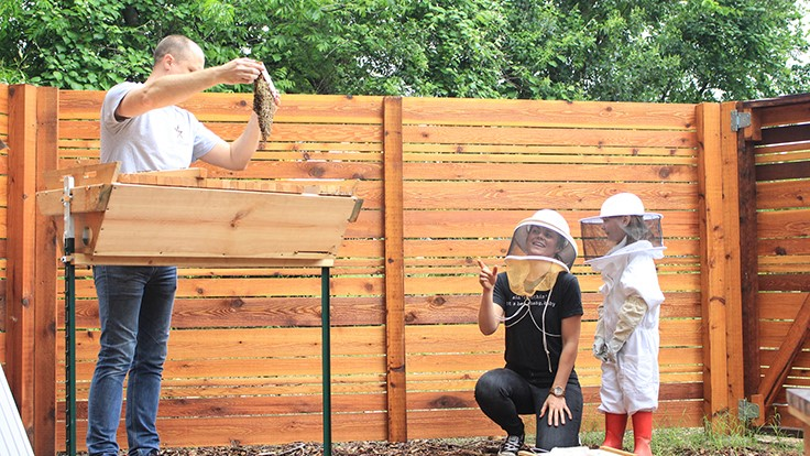 Whole Kids Foundation funds 50 new school beehives