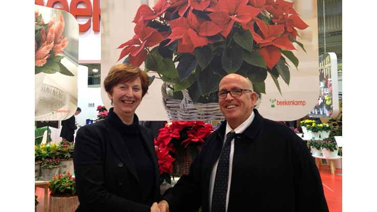 Beekenkamp Plants and Danziger partner up to sell poinsettias