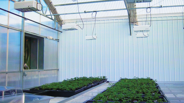 12 Considerations for Growing Cannabis in a Greenhouse